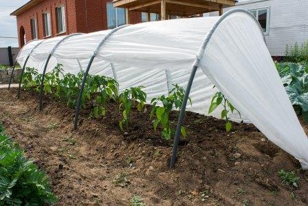 Часто встречаются на садовых участках парники из дуг с укрывным материалом