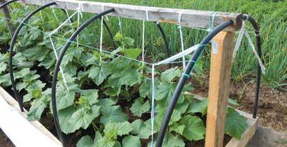 Чтобы вырастить неплохой урожай, можно сконструировать простой парник под огурцы