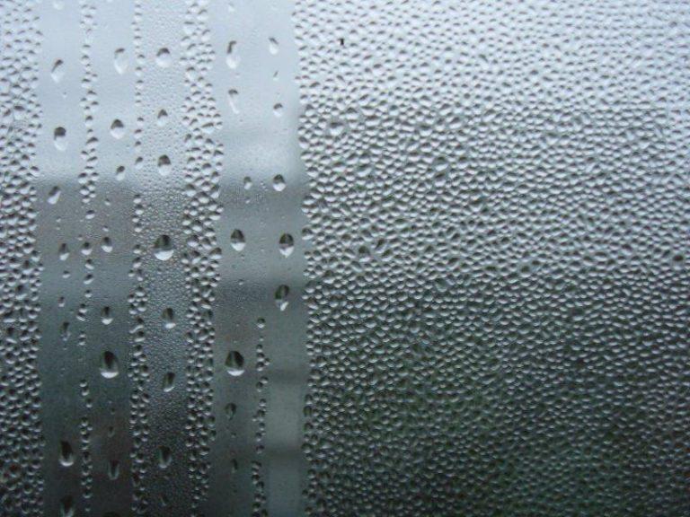 Паутинный клещ плохо переносит высокую влажность