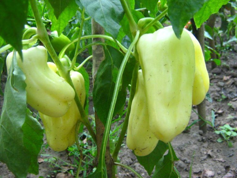 Серьезный подход к лечению растений поможет любому садоводу восстановить посадки и спасти будущий урожай