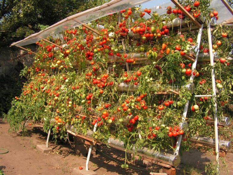 - Comment fabriquer toit pour tomates ...