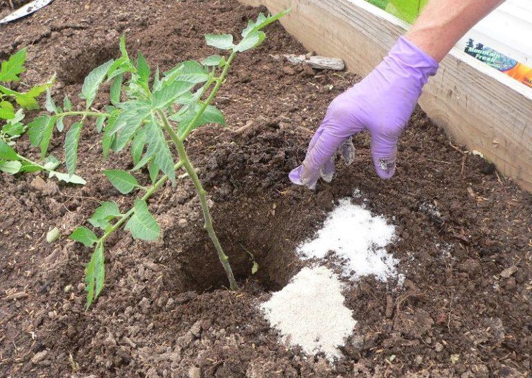Самым эффективным источником азота считается удобрение мочевина, или карбамид