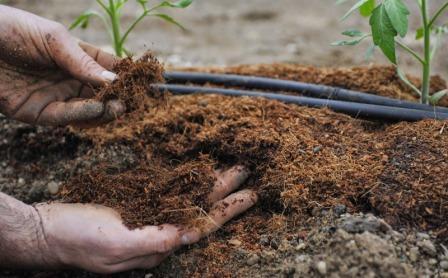 Один из секретов здоровых растений, который нам рассказывает в своих видео Юлия Миняева, - подкормка помидоров