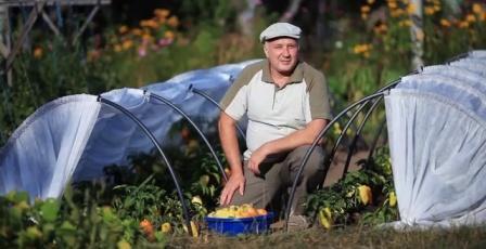Вырастить урожайные овощи на своем участке поможет парник Подснежник