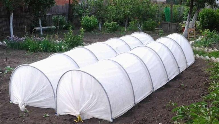 В Подснежнике можно выращивать практически любые овощные культуры