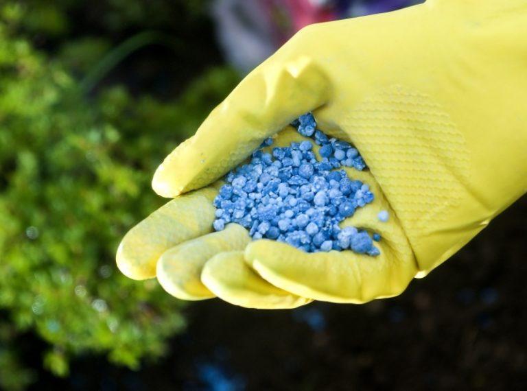 Фосфорными удобрениями перец необходимо обеспечивать в течении всего сезона