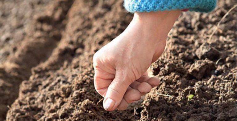 Чтобы подготовиться к подзимним посевам, почву нужно заблаговременно перекопать и внести удобрения