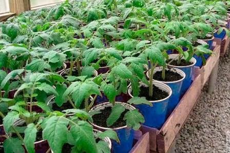 Вариантов существует много. Огородники могут применять в таких целях покупные средства или использовать подкормки, приготовленные в домашних условиях