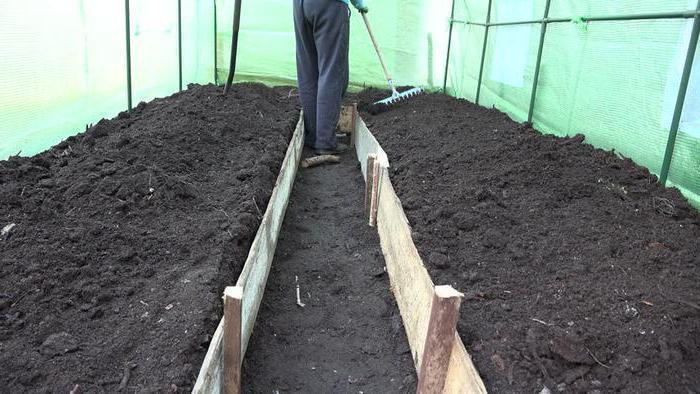 В идеале земля для томатов в теплице должна быть теплой, богатой на легкоусвояемые минеральные вещества, частично состоять из песка, содержать разрыхляющие компоненты и биогумус