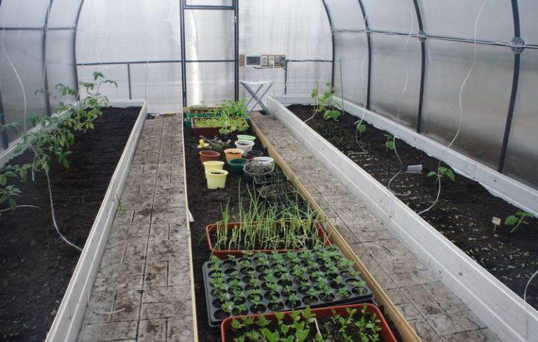 Важным моментом при выращивании помидоров в теплице является удобрение земли