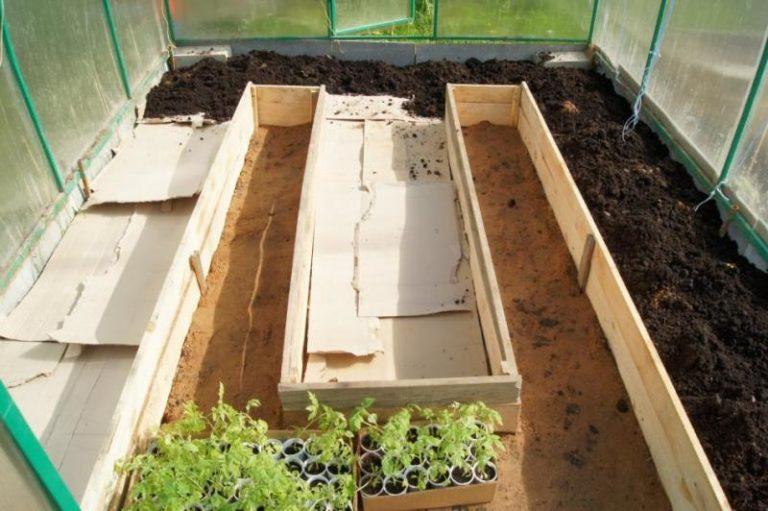 Томаты — теплолюбивое растение. Очень важно высаживать рассаду в хорошо прогретую почву, иначе возможно загнивание корневой системы растения