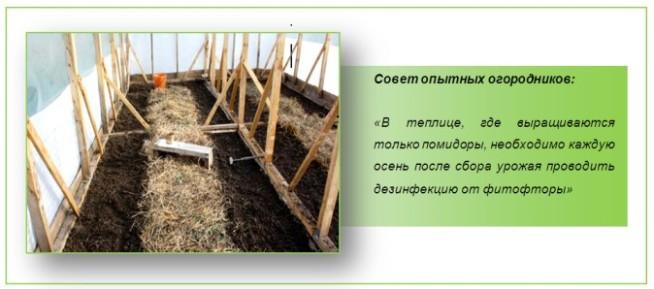 В целях безопасности от фитофторы поверхность земли, стены и потолок в теплице обрабатывают