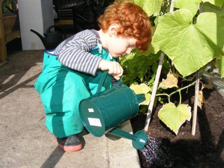 Обильно нужно поливать огурцы в теплое время года