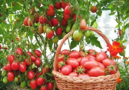 Каждый вид овощных культур имеет свои особенности ухода
