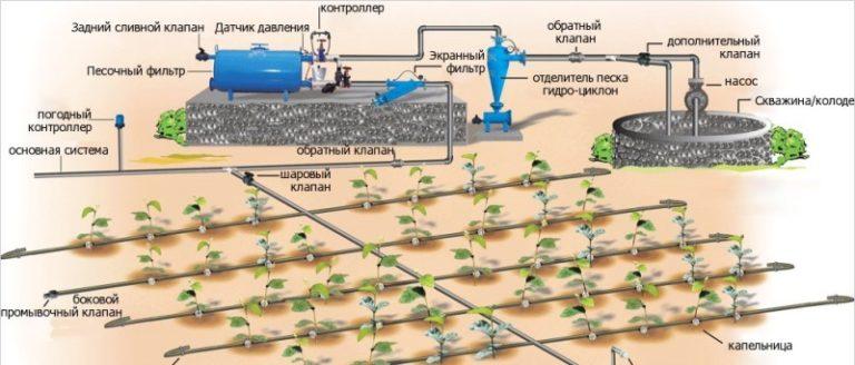 Идеальный вариант — капельный полив, когда к каждому растению проводится индивидуальная трубка с регулирующим клапаном