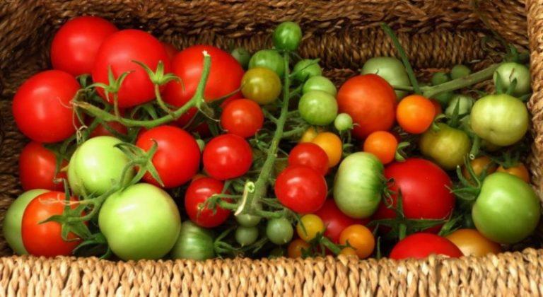 Суд решил при ввозе в страну считать помидоры овощами, несмотря на то, что уже было определено, что томат — фрукт или плод
