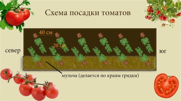 Посадка помидор должна осуществляться в некислых грунтах, избегайте места, где раньше рос картофель, самым оптимальным вариантом для выращивания томатов в открытом грунте являются грядки, где раньше выносили компост или была зол