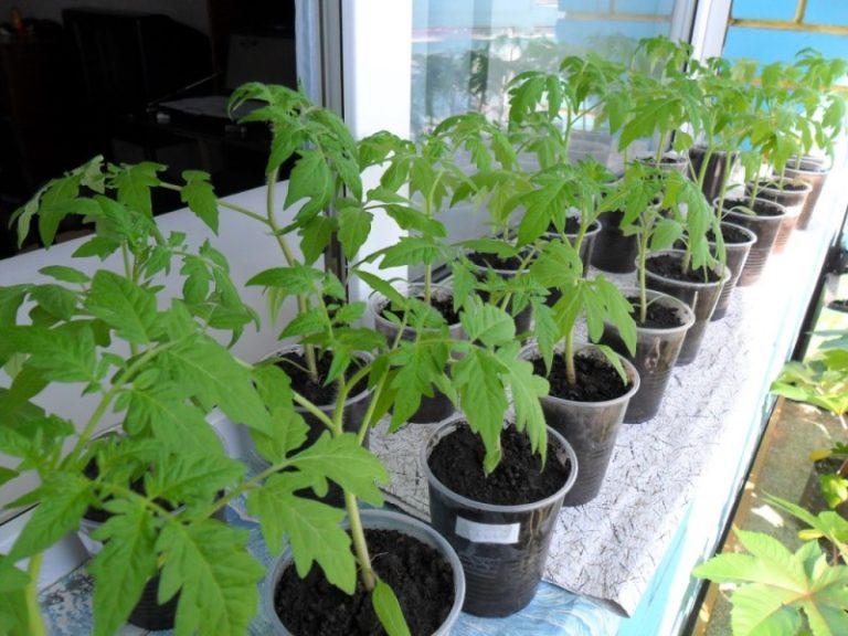 Начать следует с точного определения сроков посева, а также выяснить, когда можно высадить растения в землю на постоянное место или в контейнеры, если речь идет о выращивании на балконе