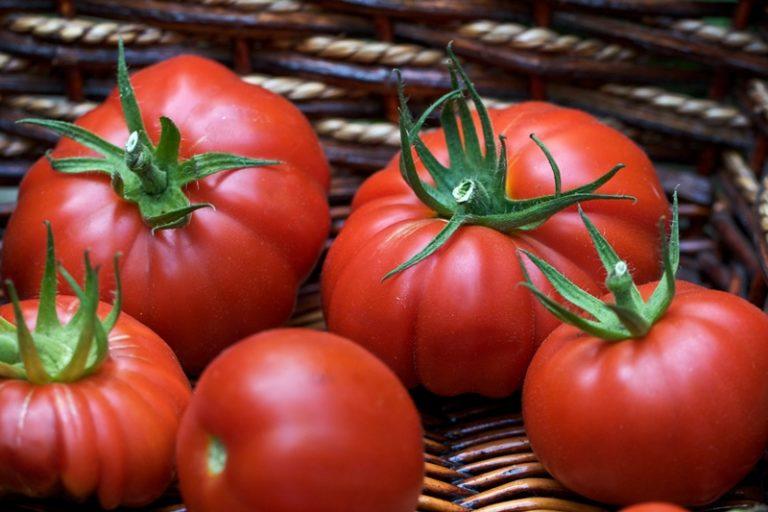 В теплице, где грядки все время находятся на одном и том же месте, следует сажать болезнеустойчивые гибридные сорта томатов для теплицы F1