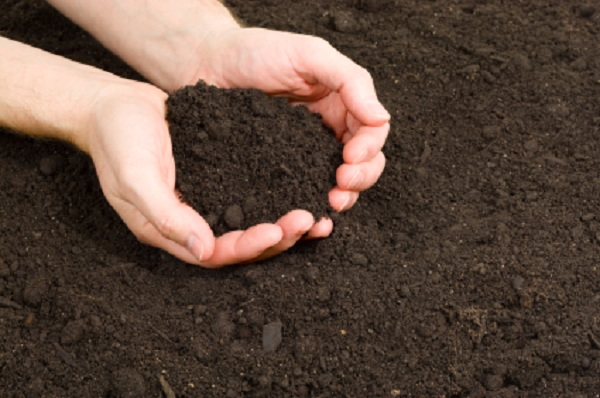 Огурцы хорошо растут в суглинистом либо супесчаном грунте
