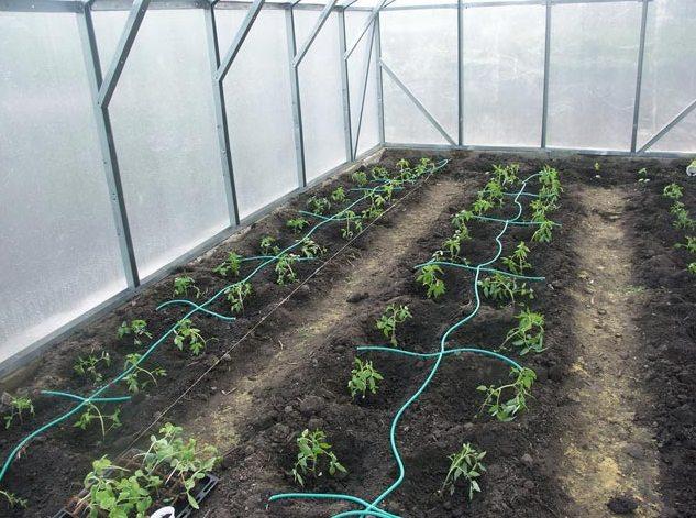Оптимальным вариантом для увлажнения грунта под растениями станет система капельного полива