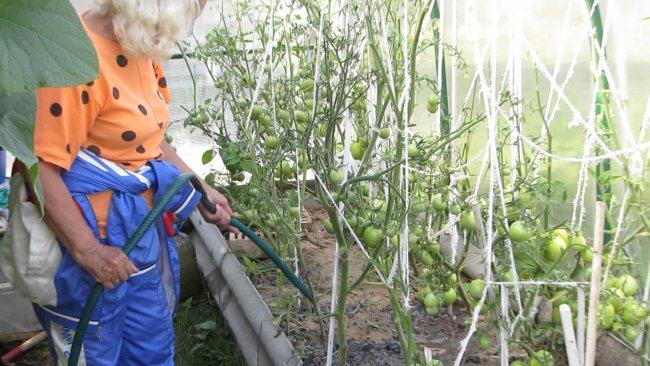 Нельзя допускать, чтобы капли воды попадали на листья и стебли растений, так как это создает благоприятные условия для развития грибковых болезней