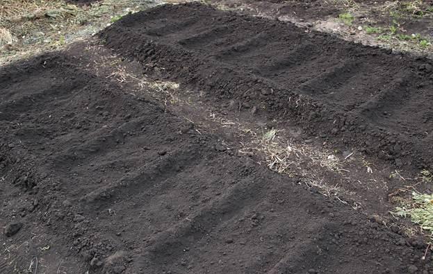 После уборки культуры, которая росла перед помидорами, землю лущат и проводят полупаровую обработку. Далее зябь вспахивают и боронят