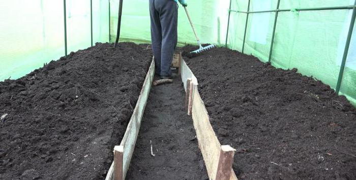 Помидор в теплице требует тщательного ухода и периодической подкормки почвы удобрениями весной