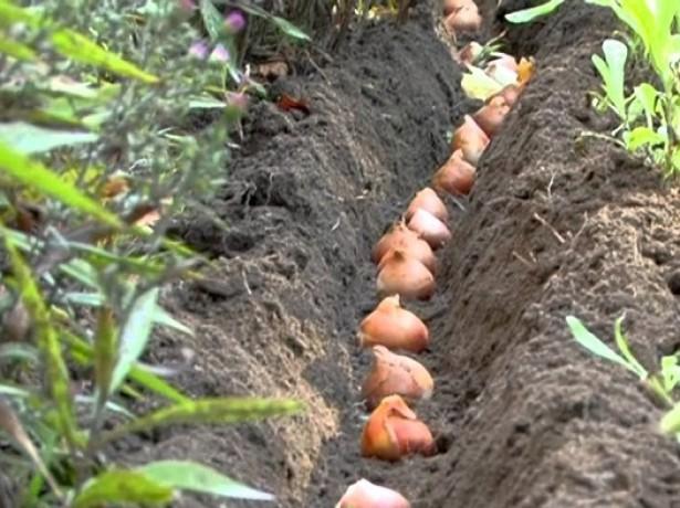 Расстояние между семенами должно быть не меньше, чем 10 см
