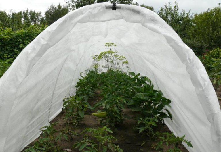Выращивание томатов - достаточно трудоемкий процесс. Но соблюдение основных правил по уходу за культурой позволяет получить великолепный урожай вкусных и полезных овощей