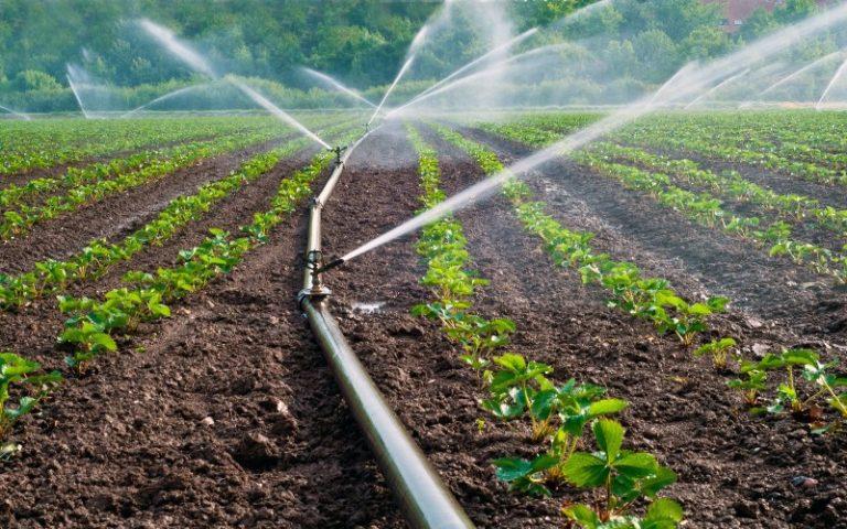 Полив клубники должен быть регулярным, но его объемы зависят от состава почвы и условий погоды