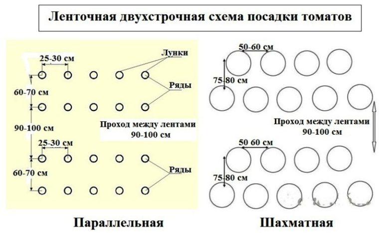 Расстояние между томатами в теплице соблюдают в соответствии с шахматной схемой, предполагающей формирование двух рядов низкорослых сортов