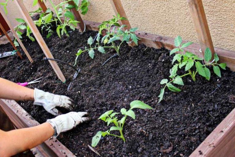 Хорошо прогретые грядки позволяют сделать посадку томатов на несколько недель раньше, чем это принято