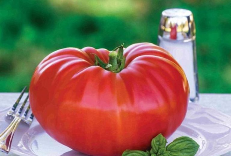 Выращивая помидоры у себя на участке, мы надеемся собрать качественный и хороший урожай