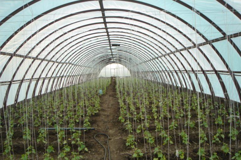 Выбирая тот или иной вид промышленной теплицы, опирайтесь на те виды растений, которые планируете сажать