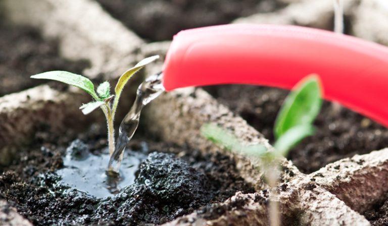 Прежде всего, чтобы посевы не вытягивались, нужно использовать для помидорной рассады специальный грунт для пасленовых культур