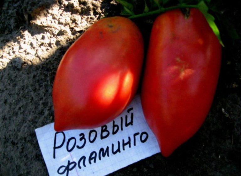 Помидоры крупные. Даже небольшой плод весит более 100 г. Чаще масса достигает 150-200 г.