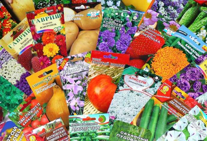 Прежде чем приступить к выбору посадочного материала, необходимо обратить внимание на посевные и сортовые качественные характеристики семян