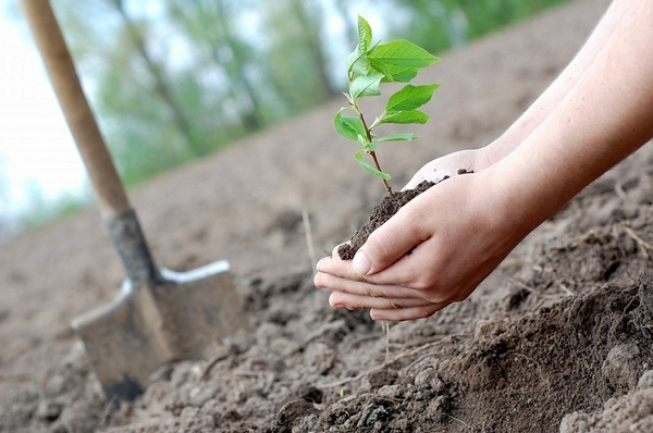 В начале октября можно осуществлять посадки деревьев, но лишь при условии, что грунт не промерз
