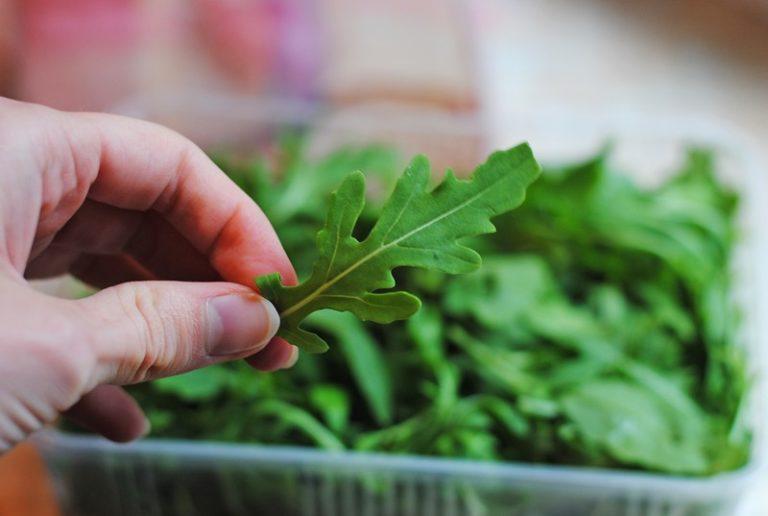 Трава может расти на любых землях, но качество полученной зелени будет невысоким, если корням не будет хватать микроэлементов, влаги и воздуха