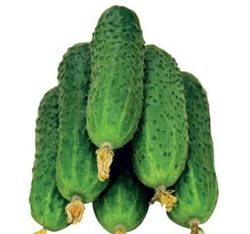 Семена самоопыляемых сортов огурцов для теплицы в продаже можно встретить повсеместно