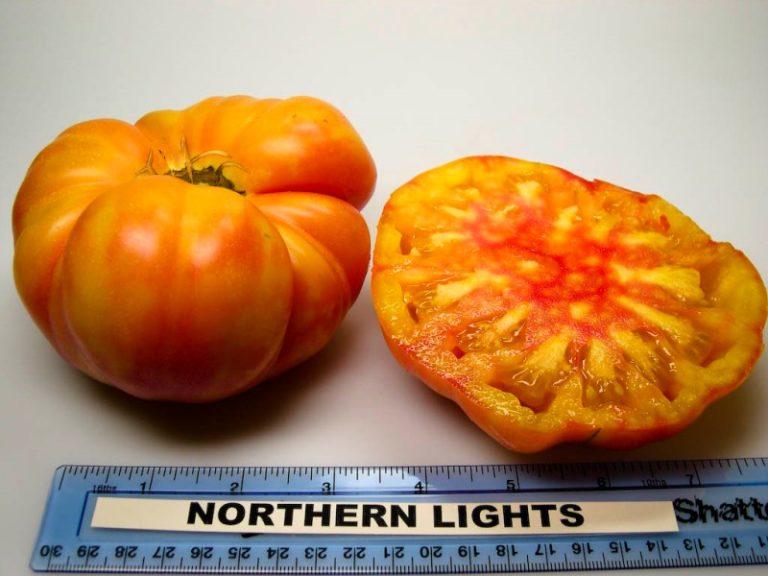 Северное сияние — удлиненные помидоры небольшого размера, полосатые, сладковатого вкуса
