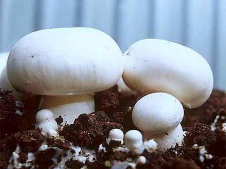 Выращивание грибов на сегодняшний день является весьма прибыльным делом