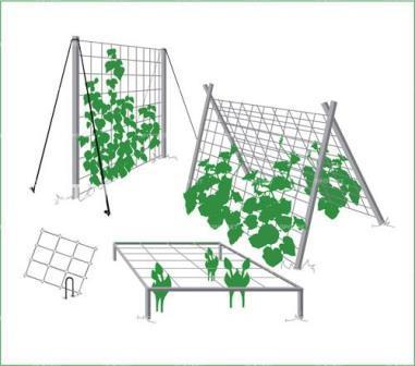 Шпалера для огурцов многократно умножает урожай