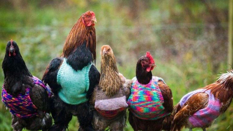 У слизней достаточно природных врагов: куры, утки, галки, грачи, скворцы, некоторых чайки