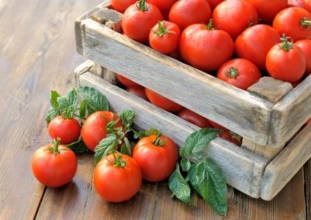 Срок сбора томатов в теплице зависит и от конкретного сорта