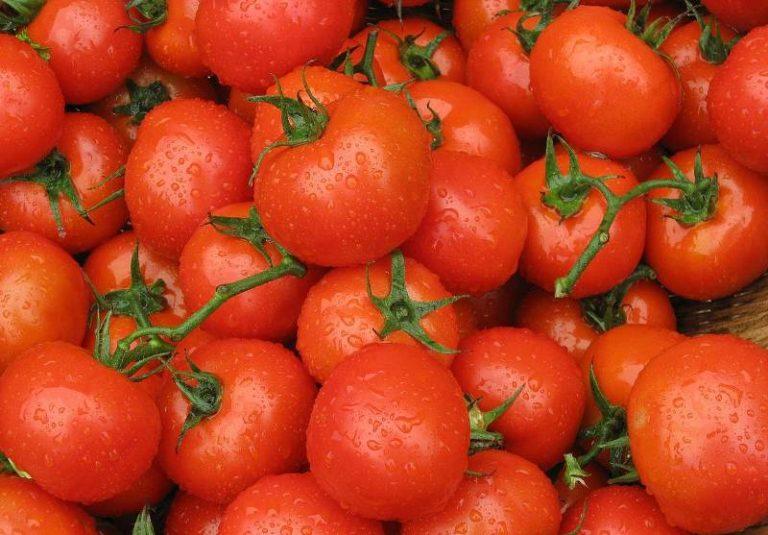 Большой интерес к данному овощу проявляют крупные хозяйства, где плоды с полей собирают при помощи механизированной техники