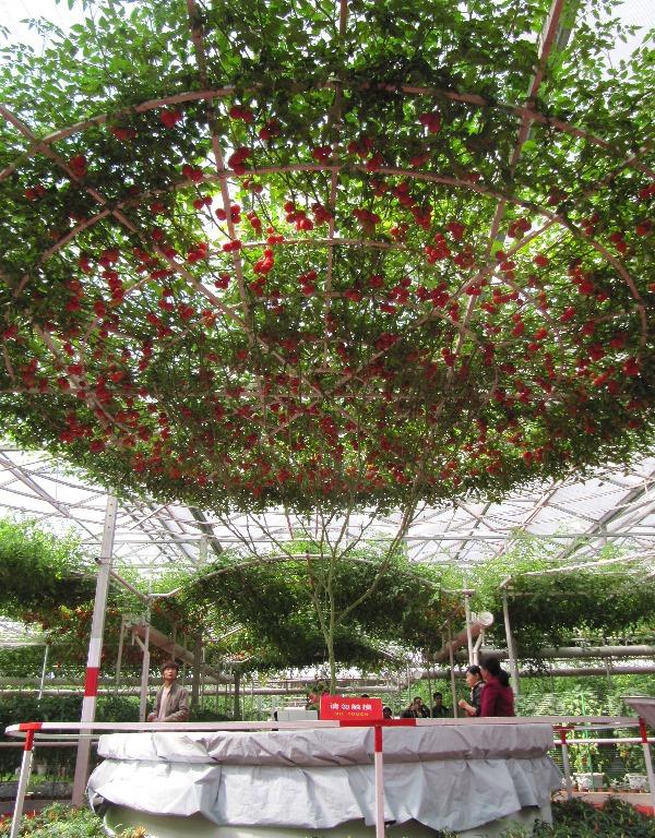 Точные признаки спелости варьируются в зависимости от сорта, но в большинстве случаев помидор должен быть яркого цвета и твердым на ощупь