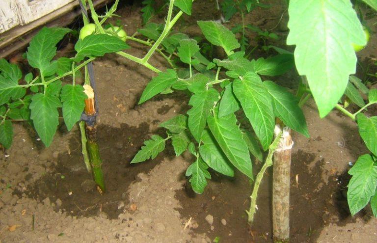 Фосфатное удобрение отличается тем, что имеет длительный срок действия