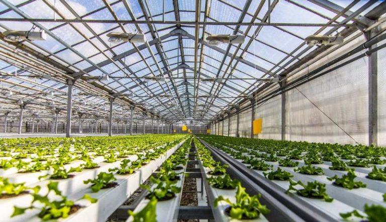 Теплица прекрасно подходит для разведения многих садово-огородных культур: овощей, клубники, зелени, цветов и даже грибов